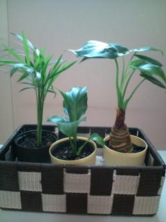 観葉植物三種盛り